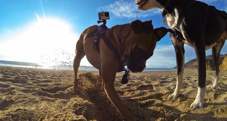 gopro-fetch-dog-harness-1