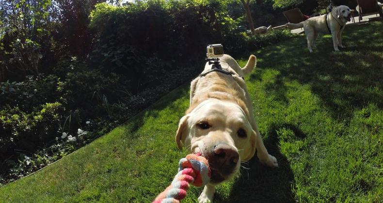 gopro-fetch-dog-harness-2
