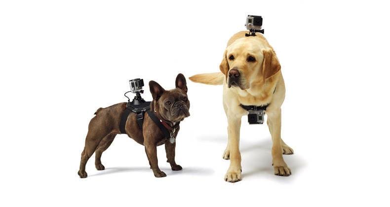 gopro-fetch-dog-harness-3