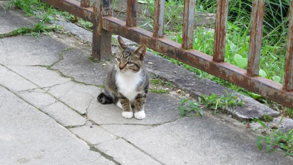 Fushimi-Inari-Taisha-shrine-cat