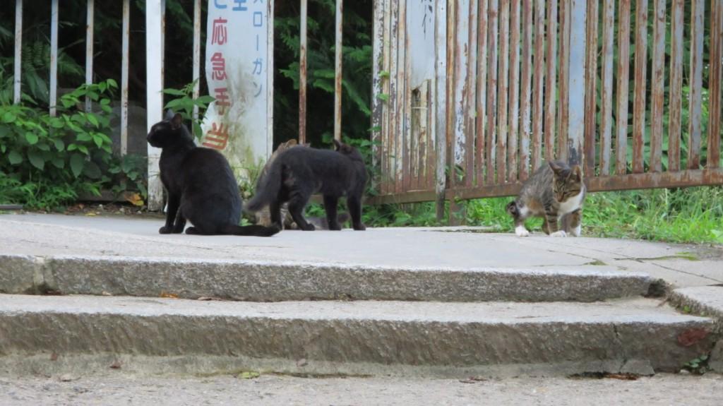Fushimi-Inari-Taisha-shrine-cats-2