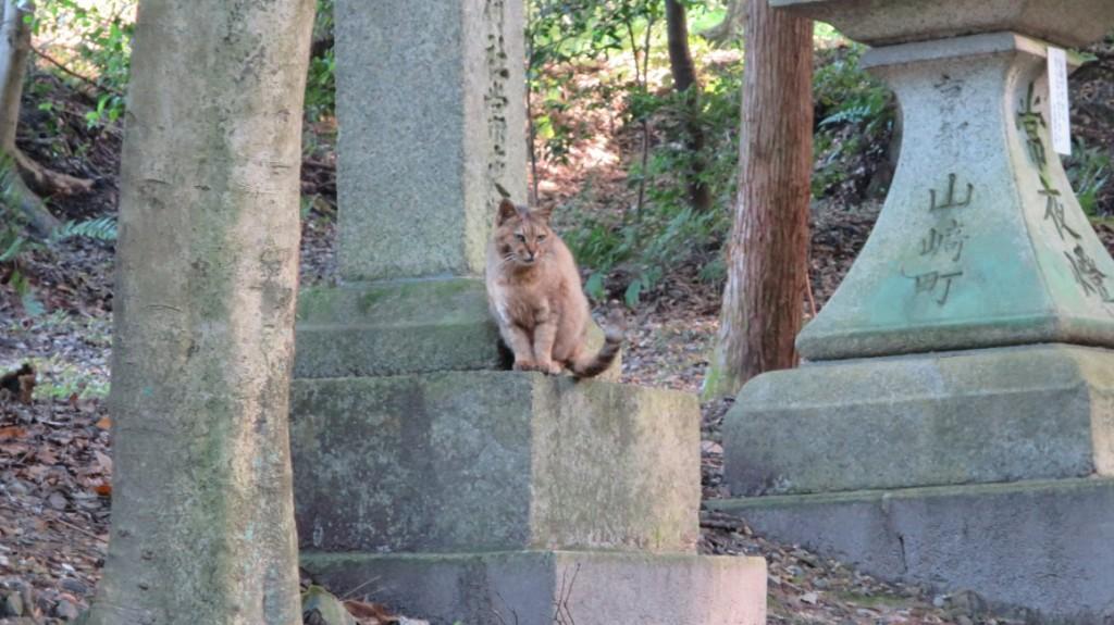 Fushimi-Inari-Taisha-shrine-cats-3